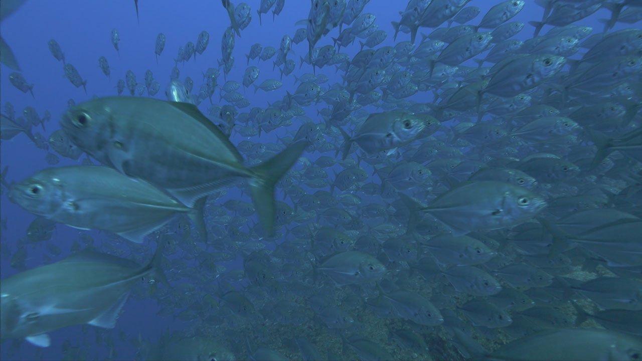 Os mais importantes locais de mergulho do mundo em outubro no canal Odisseia