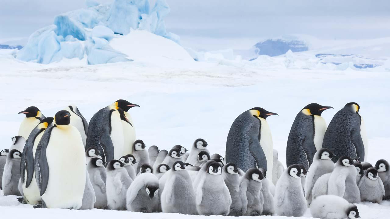 O Imperador - A Marcha dos Pinguins 2 / L'empereur (2017)