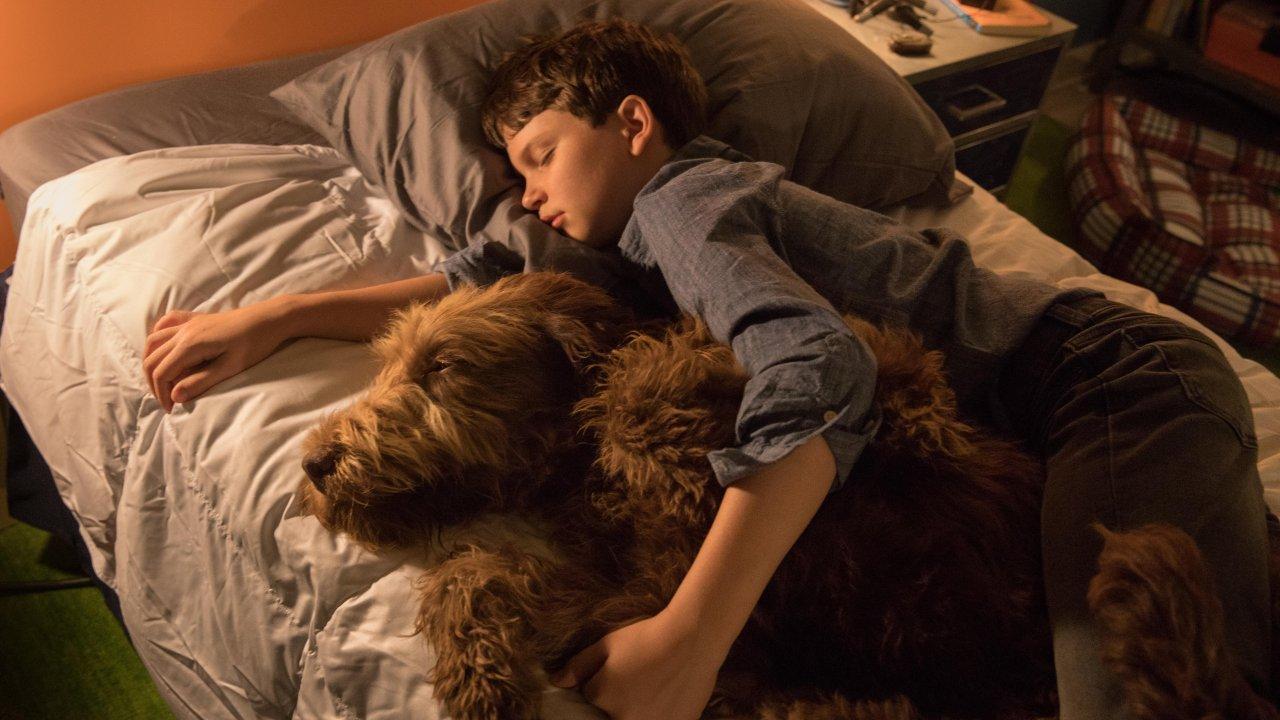 O Teu Melhor Amigo / Think Like a Dog (2020)