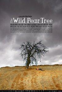 Poster do filme A Pereira Brava / Ahlat Ağacı / The Wild Pear Tree (2018)