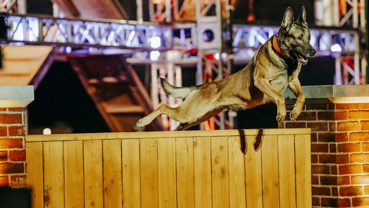 """""""Top Dog"""": concurso de cães de elite no canal Blaze"""