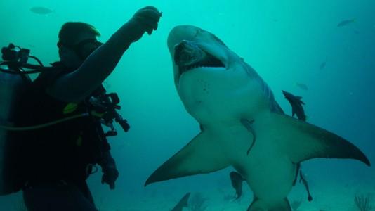 """""""Às Escuras com Tubarões"""" estreia em agosto no Discovery Channel"""