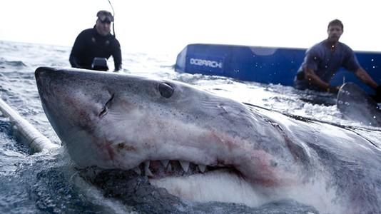 """""""Entre Tubarões"""": conclusão da temporada em setembro no canal História"""