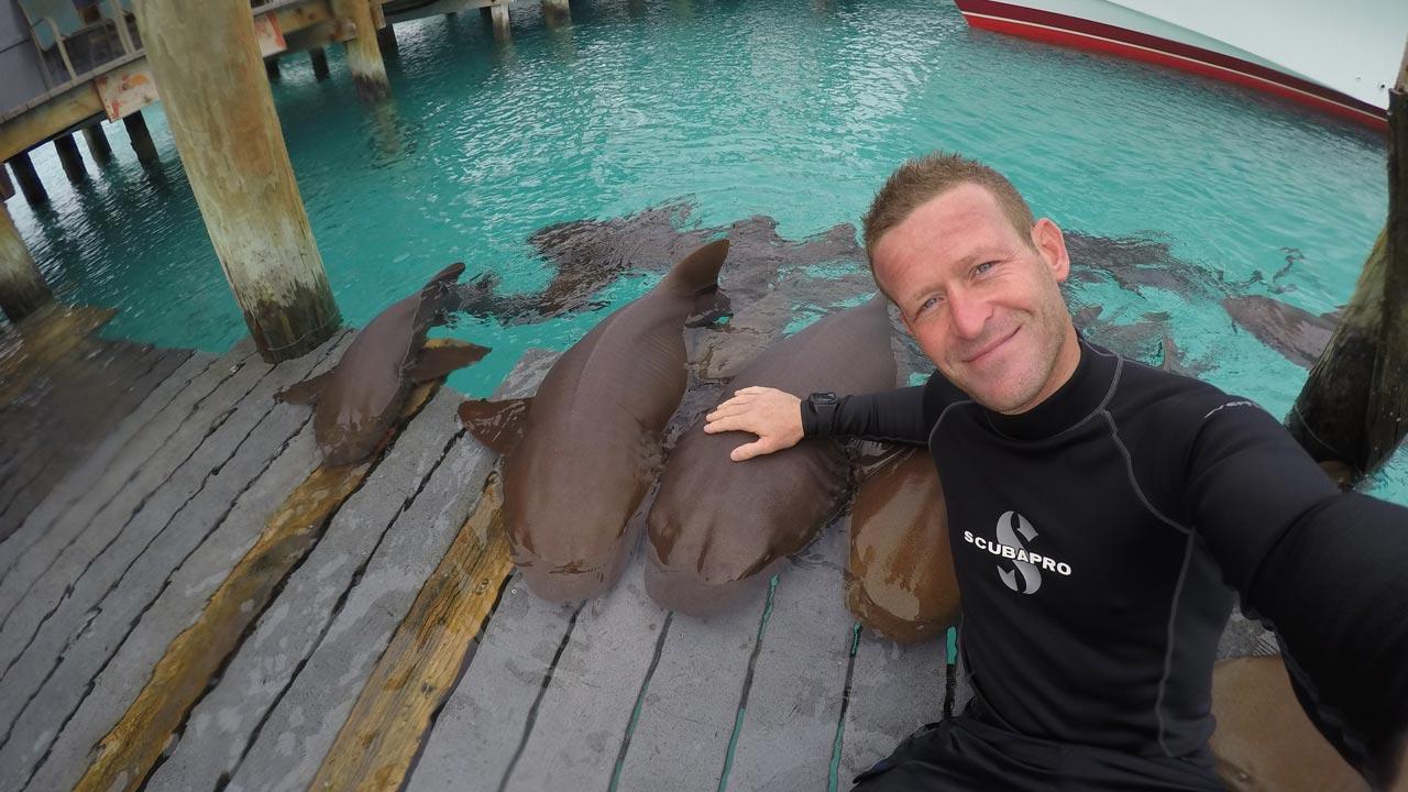 """Vem aí o """"Sharktember"""" - um mês inteiro dedicado aos tubarões no Discovery Channel"""