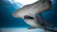 Discovery Channel apresenta a Semana do Tubarão 2019