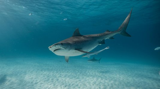 """Discovery Channel Portugal anuncia alinhamento da """"Semana do Tubarão"""" 2020"""