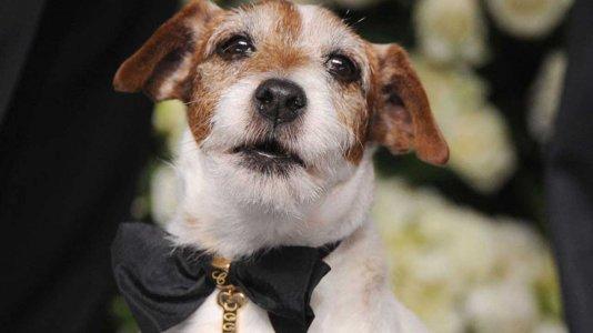 """Morreu Uggie, o cão de """"O Artista"""""""